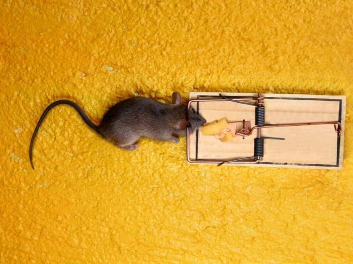 How Much Do Mouse Traps Cost?